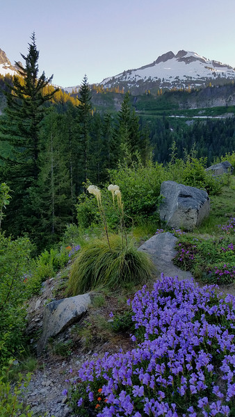 Beargrass at Mt Ranier.jpg