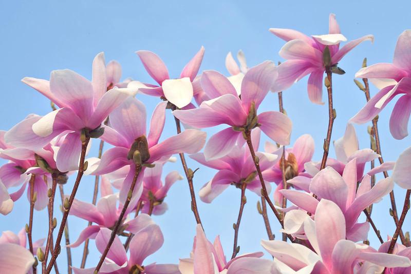 Magnolias12-0862-Edit copy.jpg