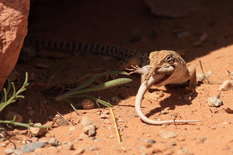 Lizard0005.JPG