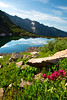 Flowers in front of Pitkin Lake, CO