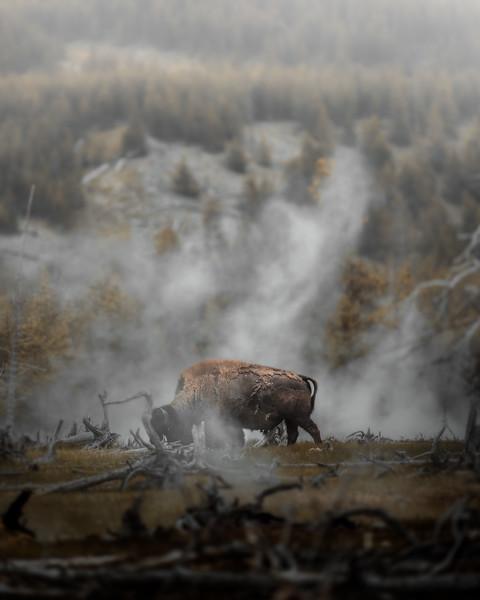 Through the Steam