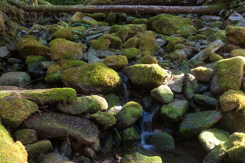Sol Duc Valley, Olympic NP