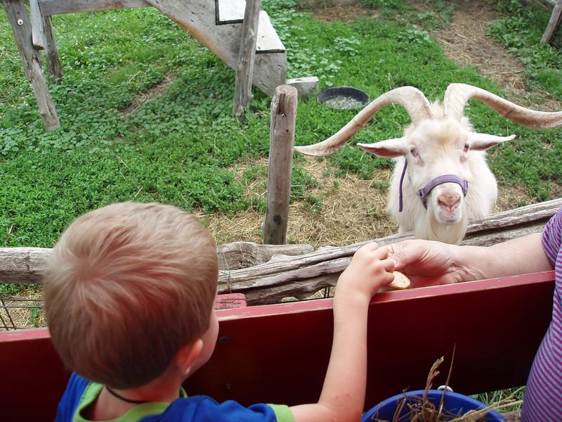 Billy goats gruff.JPG