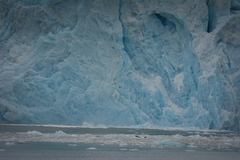 Kenai-Fjords-127.jpg