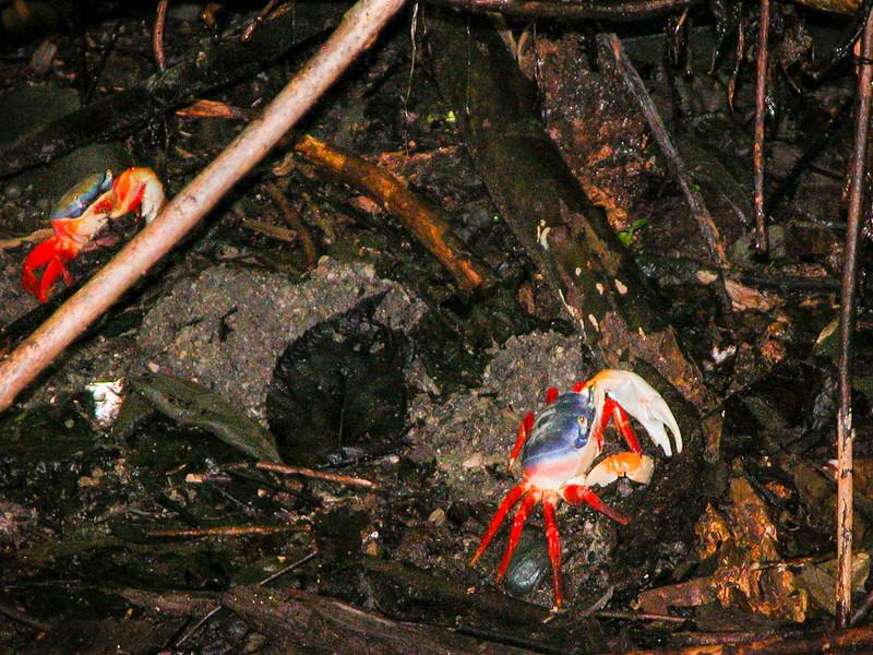 313 Crabs at MA.jpg