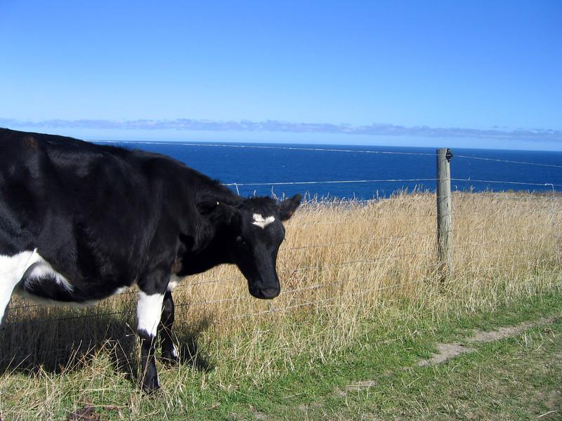 New Zealand 143.jpg