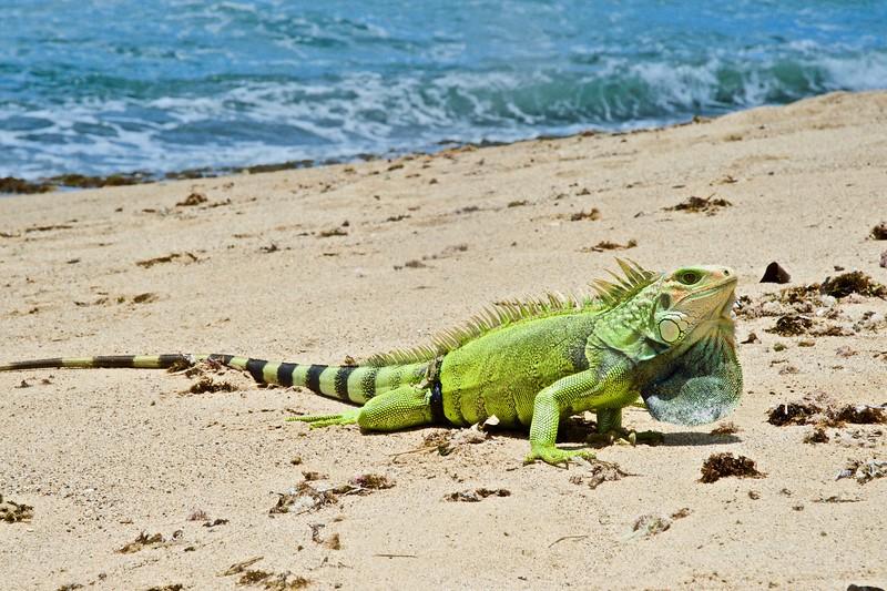 Green dragon on beach.jpg