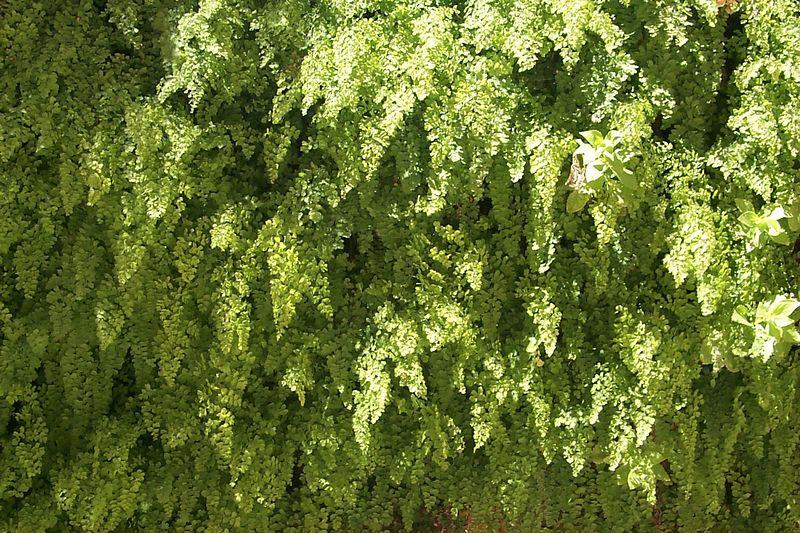 Pattern of Ferns   (Jun 08, 1999, 02:34pm)