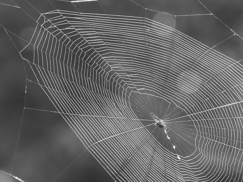 aus-oct-spider-10-23-2016-4-2.jpg