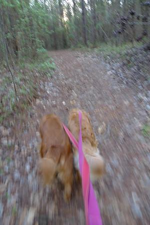 Dogz taking me for a walk along Mill Creek