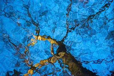 Liquid Trees