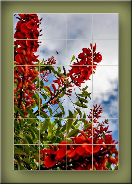 Coral Tree Bee.jpg