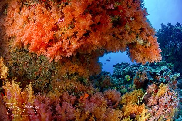 Maldives (Far North)
