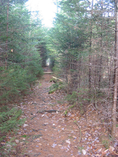 Back on trail again, into a fir tunnel.JPG