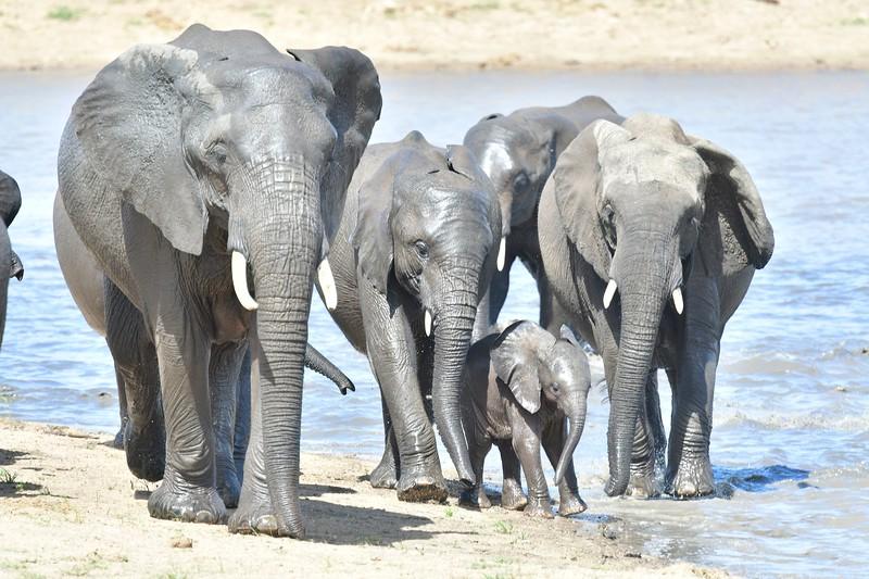 Elephants104.jpg