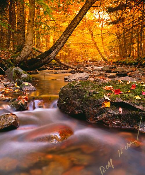 Fall colours at Cape Breton Highlands National Park, Macintosh Brook, Nova Scotia, Canada