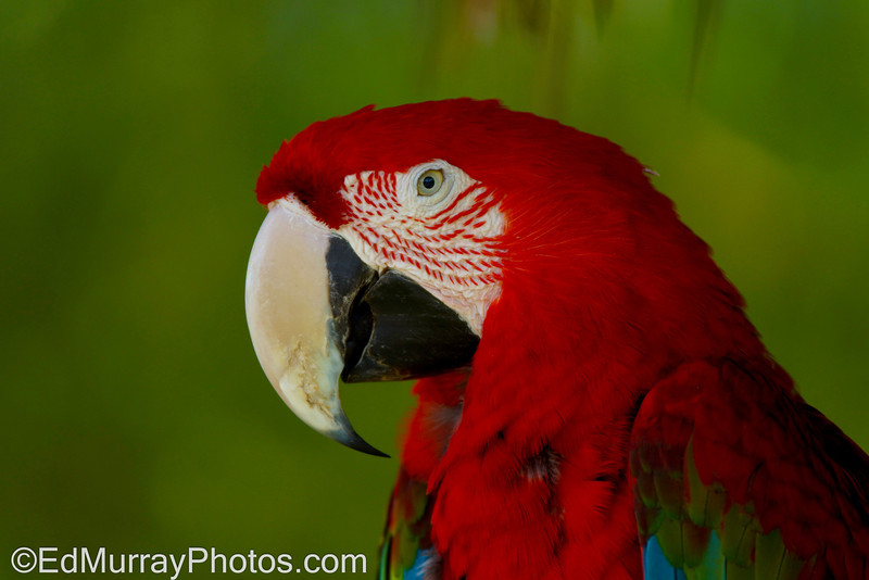 Macaw: Thank you for all your comments on my prairie dog shot yesterday!! Happy Tuesday!  7/16/2013