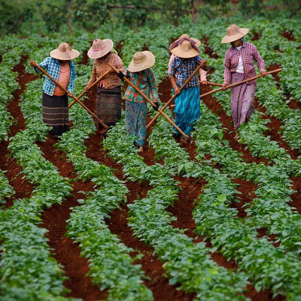 Myanmar_0618_PSokol-2959.jpg