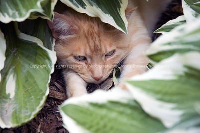 023-hiding_cat-warren_co-20jun06-4322