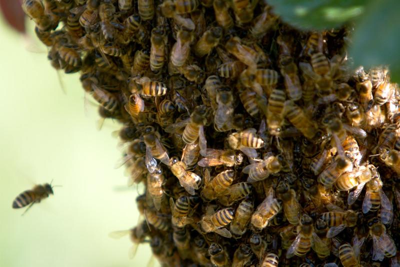 swarm_052214_012.jpg