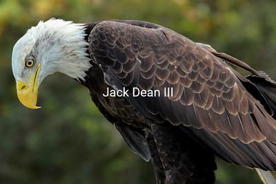 Taken at a raptor rehab center
