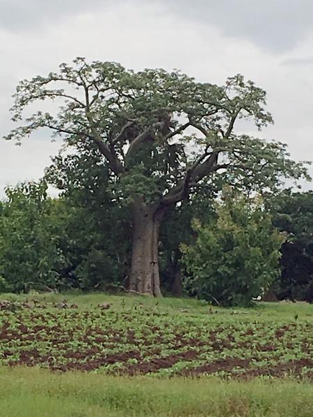 Londa tree_edited-1.jpg