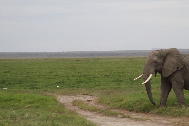Kenya 2019 #2 1577.JPG