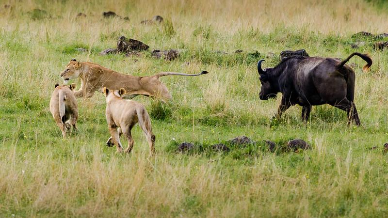 Attack of the Buffalos-0105.jpg