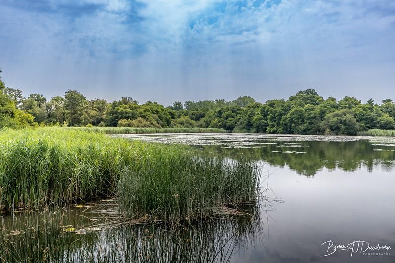 Burton and Chingford Ponds (22 of 24).jpg