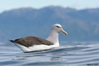 Seabirds, Gulls, and Terns
