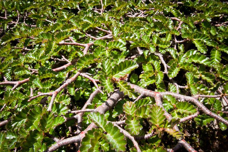 El Chalten 201112 Laguna Sucia y Laguna de Los Tres Hike  (75).jpg