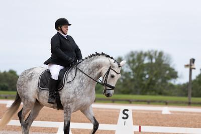 Horse 367