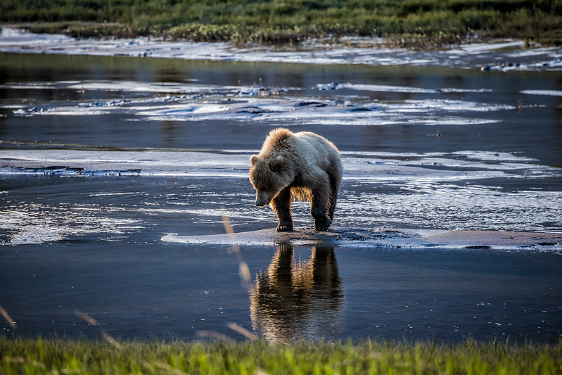 Bear Camp - things to do in Alaska