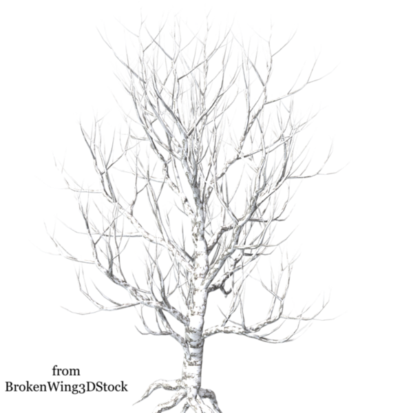 winter_tree_8_by_brokenwing3dstock-d5m1t7v.png