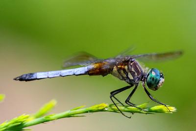 Dragonfly Macros
