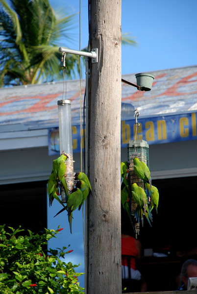 Happy Hour in the Keys by Penny Jesse
