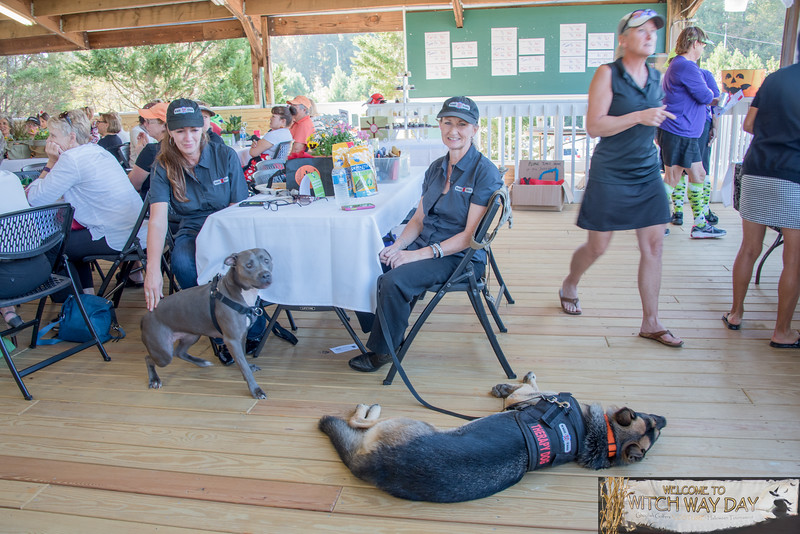_TD57533WitchWayDay-Wags4Tags-Greg-Large.jpg