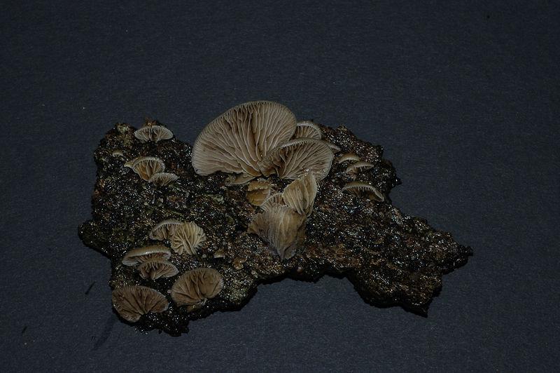 Mycology 072.jpg