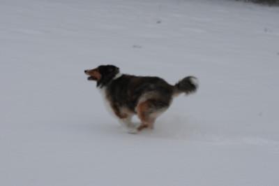 Sammy n McDuf Snow 3-2-09