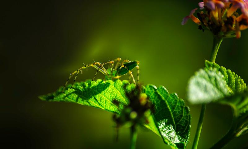 Spiders-Arachnids-069.jpg
