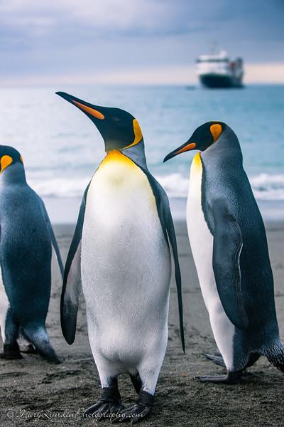 Antarctic-112