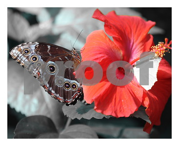 Butterfly Wonderland Scottsdale 2017