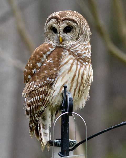 Owl on feeder2.jpg