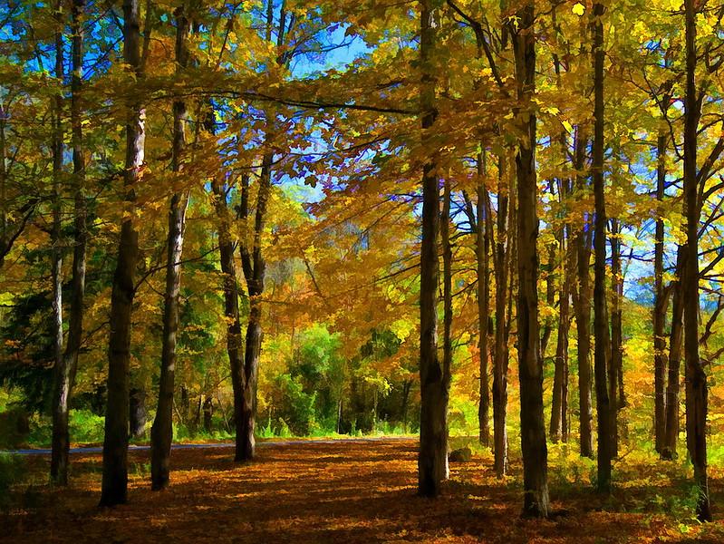 Autumn Forest 2 BUZZ.jpg