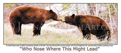 """Who Nose"" post card"