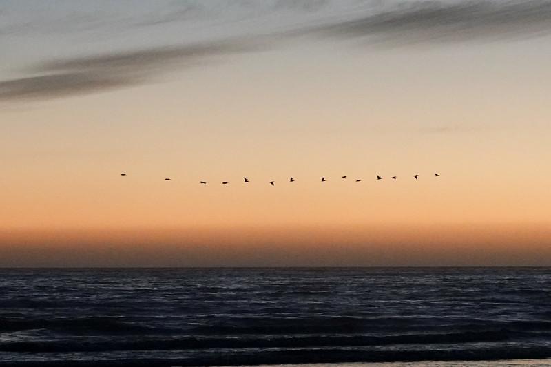 Birds soaring together