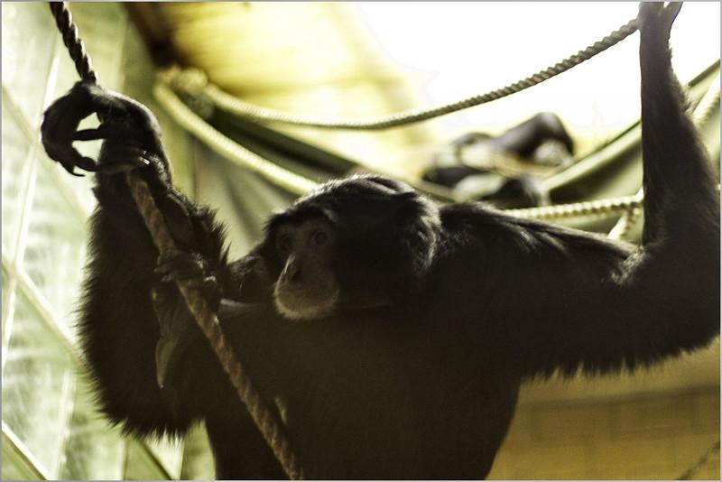 Opice všechno vidí...