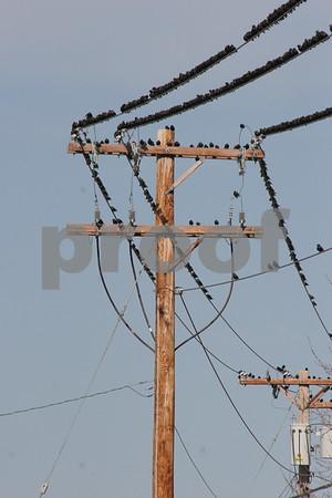 Animals on Wires