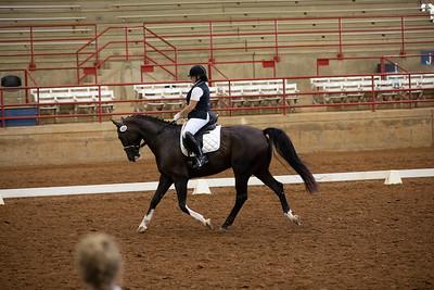 Horse 483