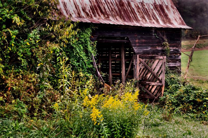 Maggie Valley foggy barn.jpg